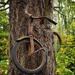 biking dude rides on